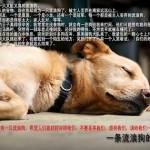 柔佛州流浪狗狗收容所 (Mutiara Rini Dog Shelter)