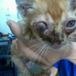 A Kitten With A Bulging Eye (Myza Nordin's)