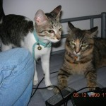 Cats And Kittens For Adoption (Moira Zamri's)
