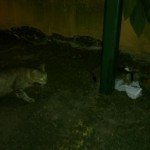 Help Needed For A Family Of Cat And Kittens (Zharina Abd Karim's)