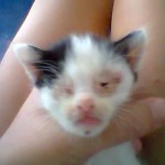 Kittens With Herpes Virus….all Perished (Maslinda's)