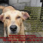 Mutiara Rini Dog Shelter In JB, Malaysia