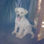 Puppy For Adoption In Perak/Ipoh (Joy E. Saga's)