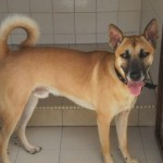 SPCA PENANG ANIMAL SHELTER'S PICK OF THE WEEK – Please Help Save Their Life & Enrich YOURS