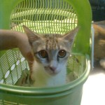 Subsidy For The IM-Pin Surgery Of A Cat (Ah Fatt's)