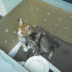 Subsidy For Two Rescued Kittens (Rohayu Yunus')