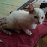 Kucing Lumpuh Di Batu Pahat (Hidayah)