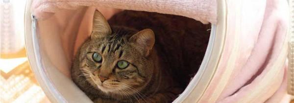 bad breath cat health forum