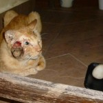 Medical Subsidy For Injured Rescued Cat (Michelle Ng Lai Kit's)