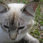 Subsidi Pemandulan 2 Kucing Betina (Nurul Huda Abd Razak)