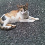 Subsidi Pemandulan Kucing Jalanan (Nurulhuda Jamaluddin)