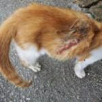 KIMI Si Kucing Oren (Siti Aishah Norzalina Mohd Suhaimi)