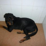 Rescue Case 拯救案子 – SOPHIE