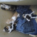 Help Needed Urgently For Abandoned Kittens (Aswan Abd Hadi's)