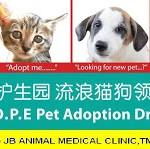 希望护生园流浪猫狗领养日H.O.P.E Pet Adoption Drive