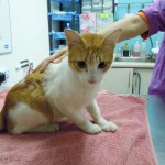 Neutering And Vaccination Subsidy For 1 Male Cat (Lim Hoey Tee's)