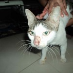 Neutering Sponsorship For 3 Cats (Norely Abd Rahman's)