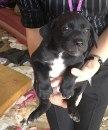 3 Puppies @ Alor Setar For Adoption