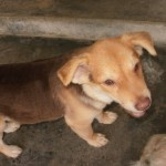 Medical & Spaying Sponsorship For Max' Sister (Kelly Tan Juat Jong's)
