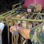 Dog Meat Factory Raided In Thailand