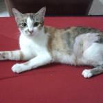 Spaying Sponsorship For 1 Female Cat In Ipoh (Liew Fong Yin's)