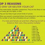DBKU Dog & Cat Neutering Campaign