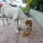 Street Dog In Puchong Needs Help (Kwan Pei Kuan's)