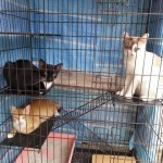 Vaccination Subsidy For 3 Cats (Veronica Ong May Yoong's)