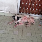 Abandoned Pet Dog Requiring Urgent Medical Help (Winnie Low's)