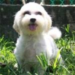 SPCA's Adoption Gallery