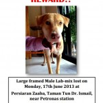 Lost Dog In TTDI Area – FOUND! (Apsara Murali's)