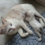 Medical Subsidy For Kitty (Nur Adlina Mansor's)