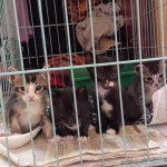 Kittens For Adoption – Adopted! (Nadia Shazana Zulkifli's)