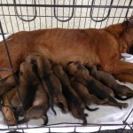 Octavia And Her 8 Pups…
