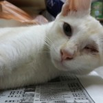 Spaying Subsidy For 2 Female Cats (Lim Swee Yen's)