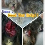 Rescue Case 拯救案子 – Emma