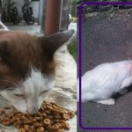 Siti Noraini Suriya's Community Cats