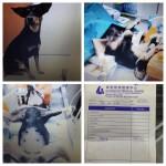 Spaying Sponsorship For 2 Female Dogs In Kluang (Tan Mei Lian's)