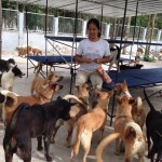 360 DOGS RESCUED FROM DOG MEAT TRADE ARRIVE AT NEW HOME