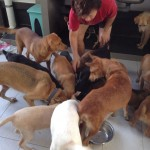 Food Sponsorship For The Kluang Community Dogs (Tan Mei Lian's)