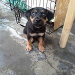 Adopter Needed For 2 Rescued Dogs In Ipoh (Yuvashine Ramasamy's)