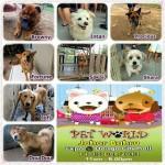 H.O.P.E Charity Drive In Pet World 希望护生园慈善活动于宠物展 (14-15 Dec13′)