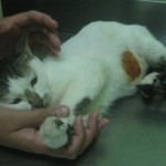 Medical Subsidy For 6 Cats (Maslinda Abd Talib's)