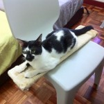 Neutering Sponsorship For 1 Male Cat (Siow Cheuk Chuen's)