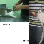 Spay-Neuter Sponsorship For 3 Community Cats (Maslinda Abd Talib's)