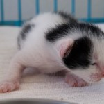 Mother And Newborn Cat Are Doing Well After Traumatic Birth