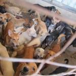 MBJB Dog Pound Rescue – Their Plight Got Caught By The Dog Catchers