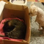 Puppy Seeing A Kitten For The First Time