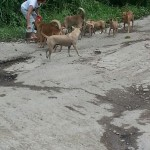 Spaying Sponsorship For 2 Female Dogs (Thong Seiw Ling's)