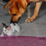 Entri Pendek: Bagai Anjing Dengan Kucing